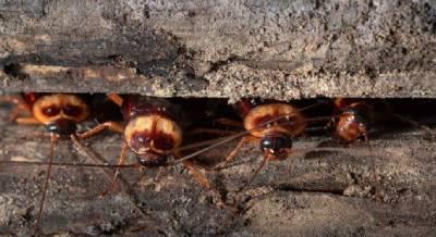 Cucarachas escondidas