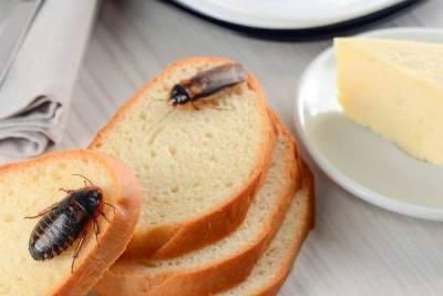 cucaracha en casa evitar