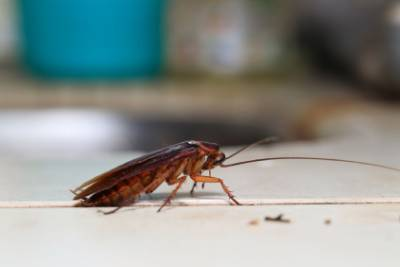cucaracha en casa