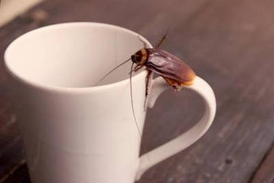 cucaracha taza