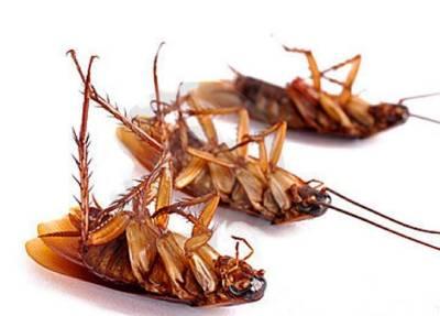 matar cucarachas voladoras
