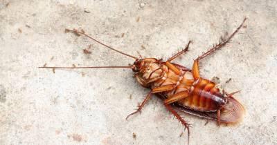 matar cucarachas