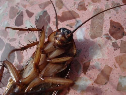 fumigacion cucarachas madrid
